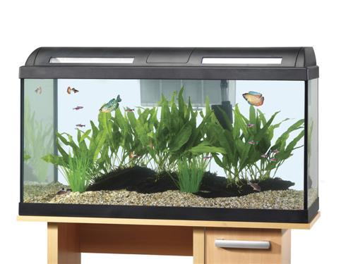 Fish tank maintenance 60 litre arcadia arc fish tank 60 Decoration aquarium 60 litres